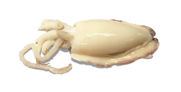 Sepia - delmaracasa.com